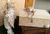 Εικόνα με Πακέτο βάπτισης με vintage καπέλο και ομπρέλα