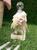 Εικόνα με Λαδοσέτ βάπτισης με λουλούδια μπεζ δαντέλα