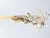 Εικόνα με Λαμπάδα πασχαλινή λυκάκι WWF